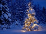 snow-covered-christmas-tree3
