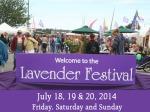 Lavender-Festival